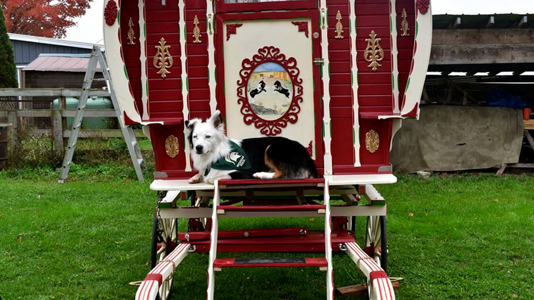 Vardoo Guard dog