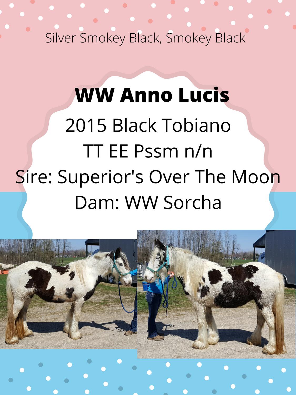WW Anno Lucis Inutero Foal ad 2021