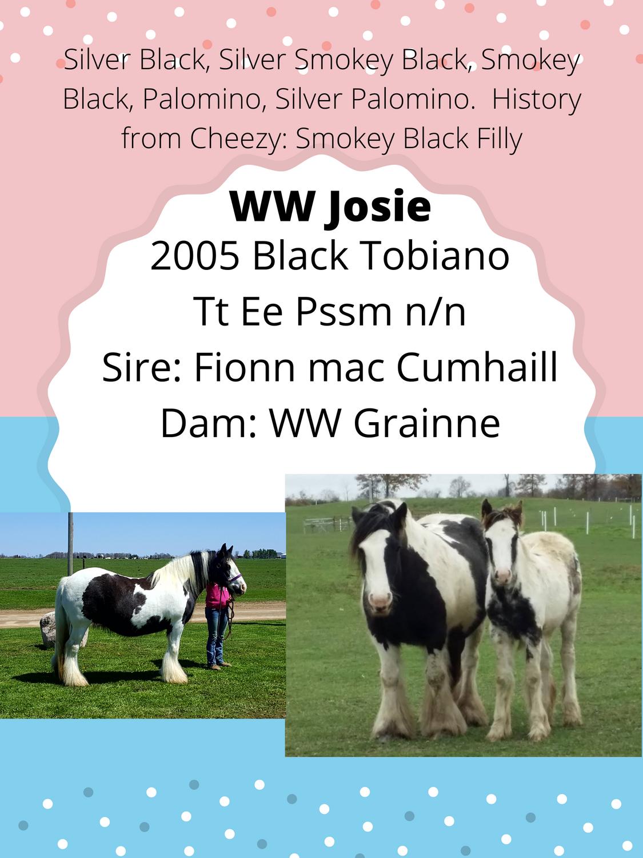 WW Josie Inutero Foal ad 2021